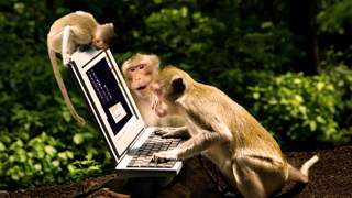 Monkeys-typing-into-a-computer