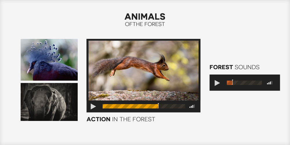 Animals-of-the-forest-Website-Graphics-Audio-and-Video